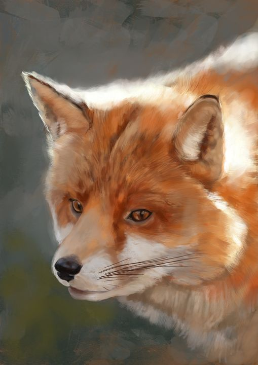 Fox - Vanderwyst