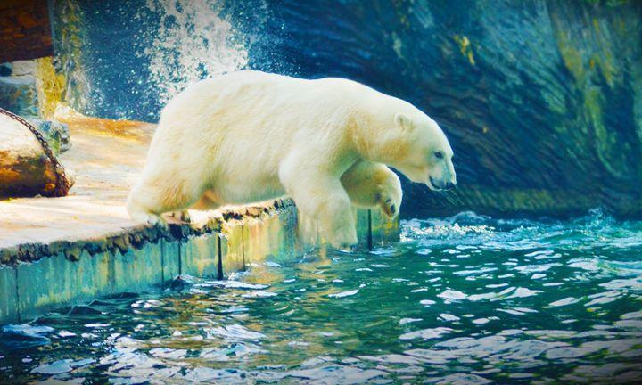 Polar - Mixed Imagery