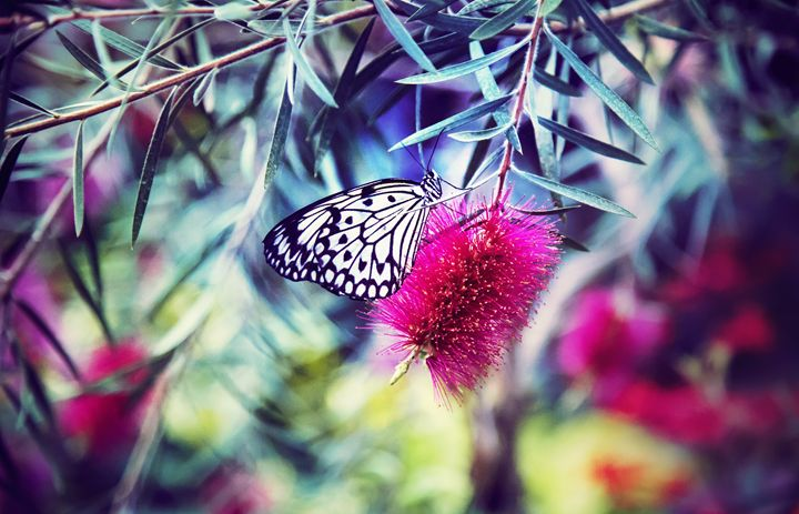 Butterfly - Mixed Imagery