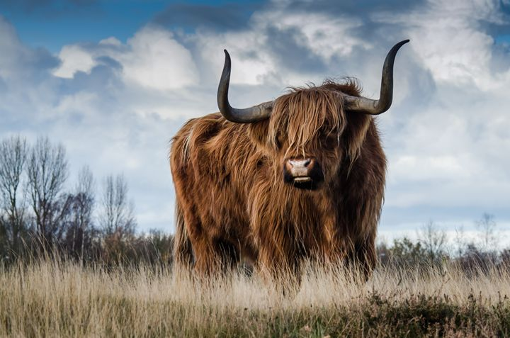 Highlander 2 - Mixed Imagery