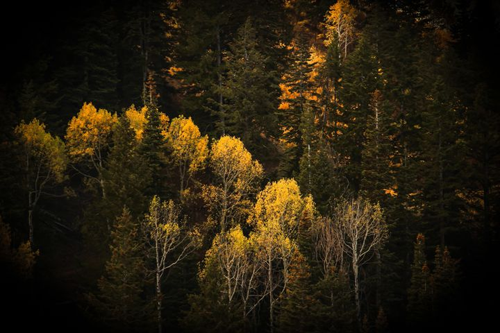 Autumn Trees - Mixed Imagery