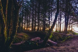 Wooded Tofino