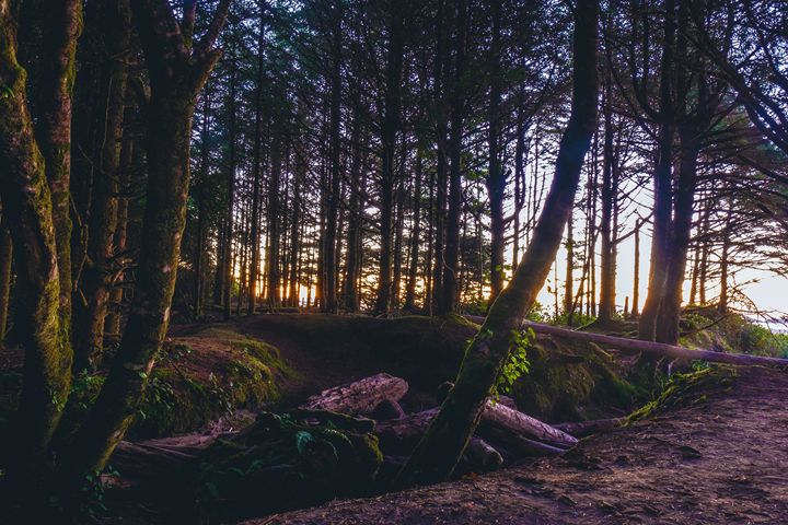 Wooded Tofino - Mixed Imagery