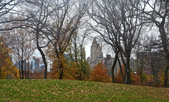 Central Park - PicThis