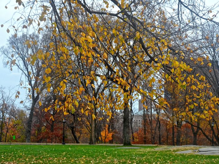 Fall In Central Park - PicThis
