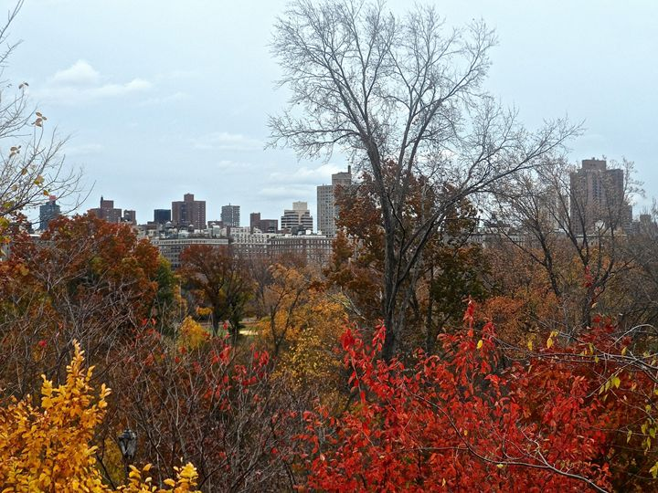 Central Park In Fall - PicThis