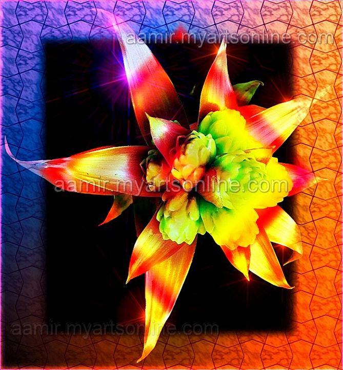 *Orange Flower* canvas mixed media - Aamir Show