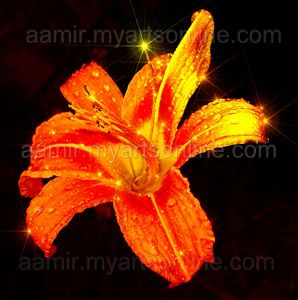*Star Lily* natural canvas artwork
