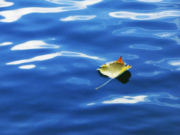 swimming leaf - unknownApe