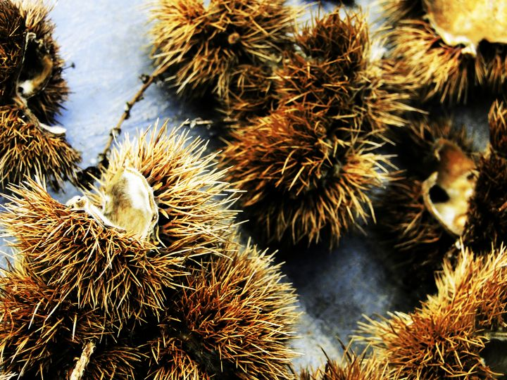 chestnut's defense - unknownApe