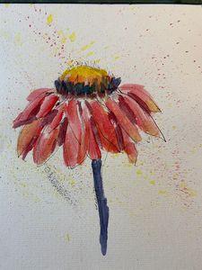 Echinacea - Tom Gaudreau Art