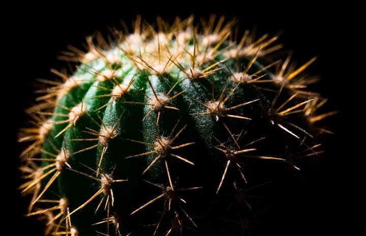 Cactus - Baptiste Natanelic Photographie