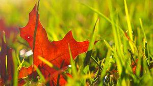 Crisp leaf
