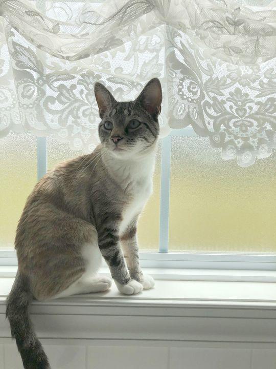 Serene kitty - Shayna prince