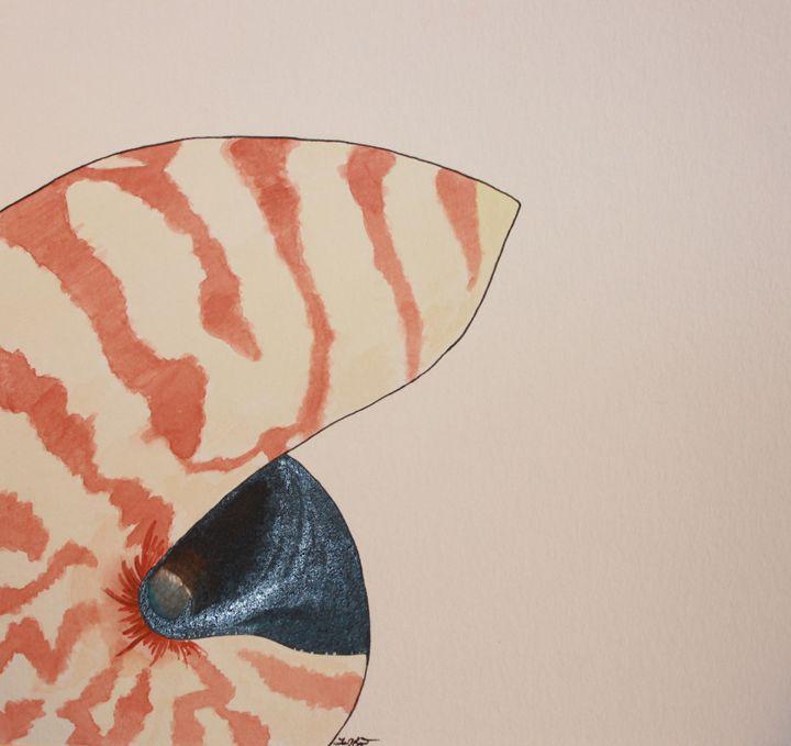 Nautilus Shell - Levi Reppert