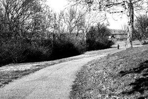Long Stroll