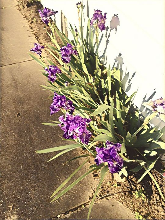 Flower Still Life - Colorbook Reality Digital Art