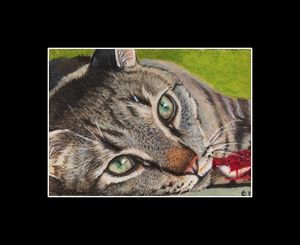 """aceo""""grey tabby cat with green eyes"""""""