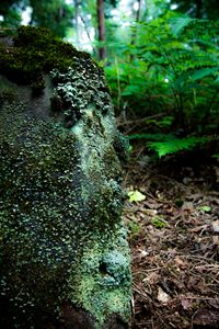 Garden of moss growing on the rocks
