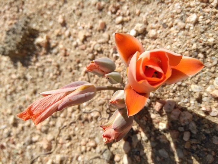 Beginning of blossoming - RNG